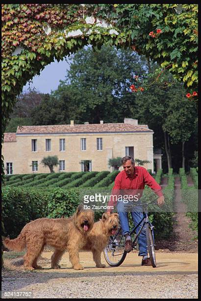 Man holding Bergers de Picard dogs | Location Graves France