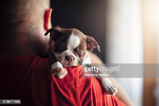 man holding Boston Terrier puppy over his shoulder