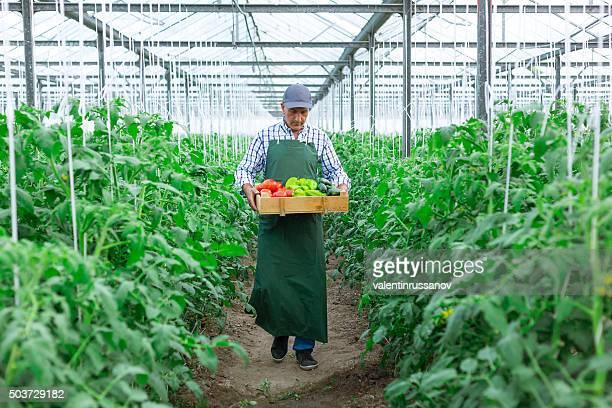 Mann hält Karton von Gemüse im Gewächshaus