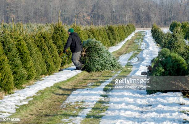 man holding branch on field during winter - tree farm stock pictures, royalty-free photos & images