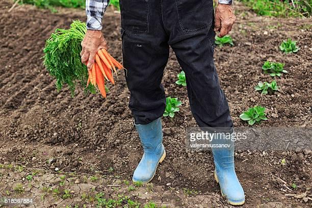 Homme tenant un bouquet de carottes