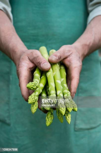 man holding bundle of green organic asparagus in hands - asparagus stock pictures, royalty-free photos & images