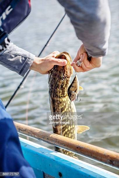 man holding caught fish - hecht stock-fotos und bilder