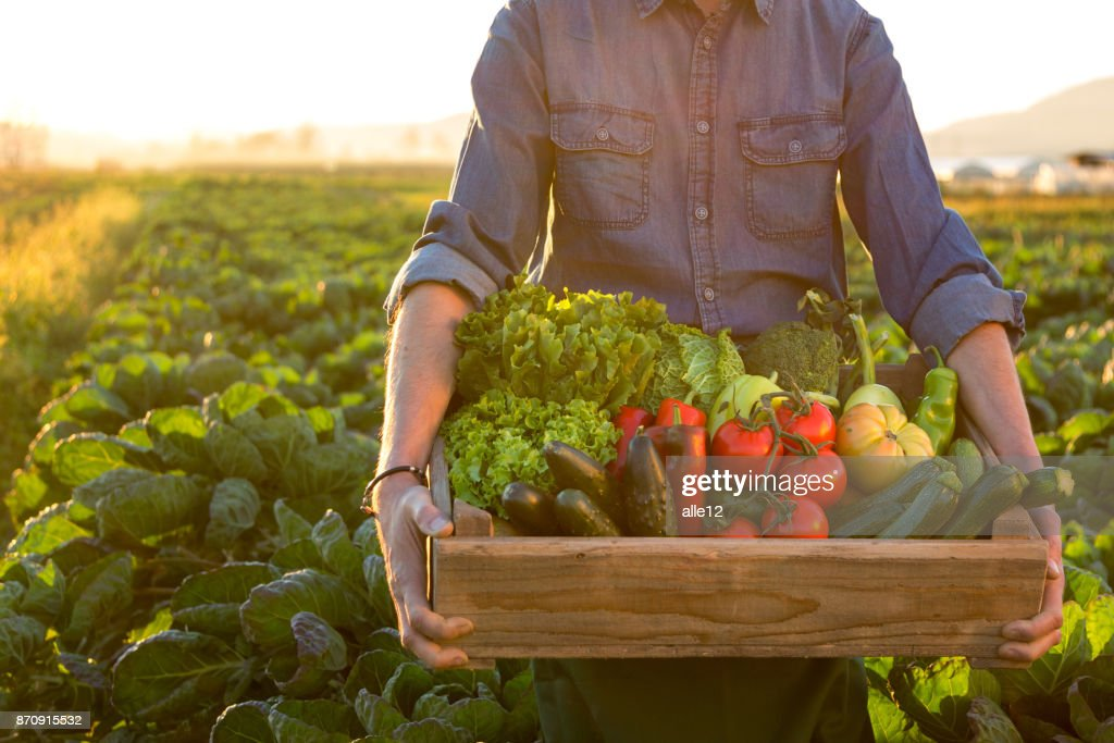 Man holding crate ob fresh vegetables : Stock Photo