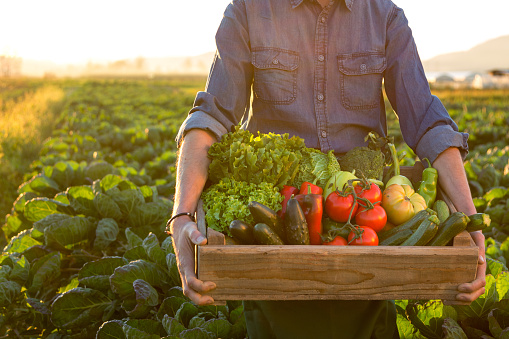 Man holding crate ob fresh vegetables 870915532