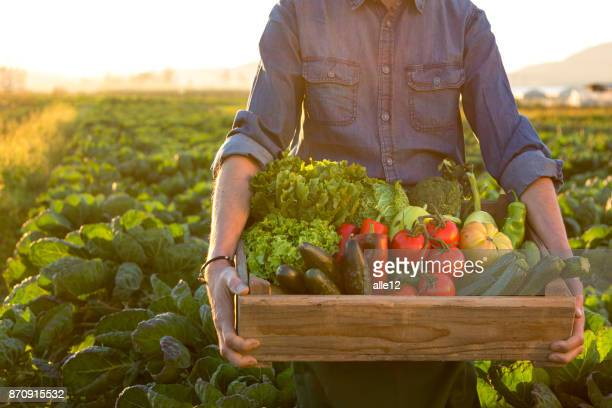 man holding crate ob fresh vegetables - raw food stock pictures, royalty-free photos & images