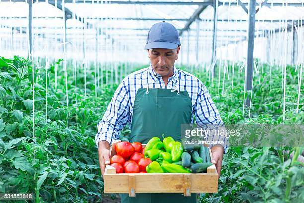 Man Holding Crate Of  Vegetables in Greenhouse