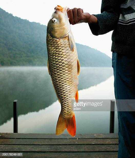 man holding fish, close-up - big fish stock pictures, royalty-free photos & images