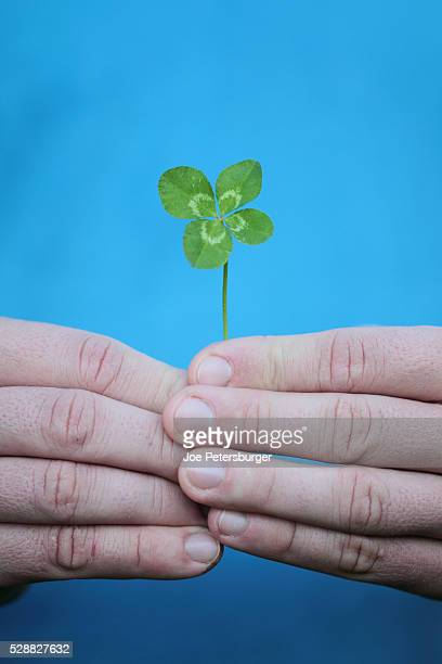 man holding four-leaf clover - 4 leaf clover stock photos and pictures