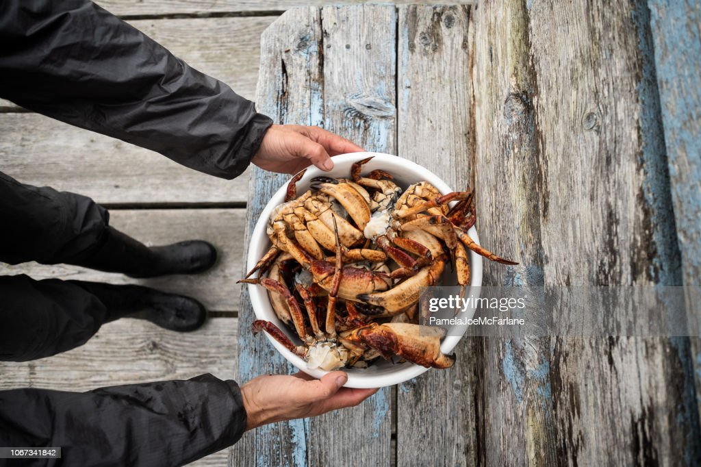 Man Holding Freshly Cleaned Red Rock Crabs over Wood Bench : Stock Photo