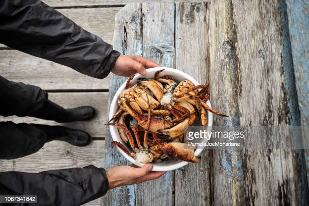 man holding freshly cleaned red rock crabs over wood bench - crab seafood stock photos and pictures