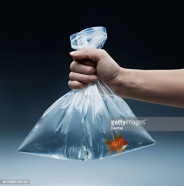 man holding goldfish in bag, close-up - goldfish stock pictures, royalty-free photos & images