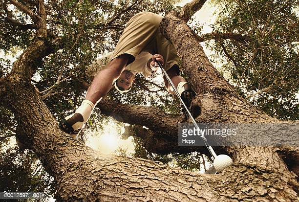 Man holding golf club to golf ball in tree, low angle view