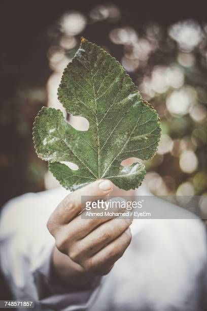 Man Holding Green Leaf While Standing Outdoors
