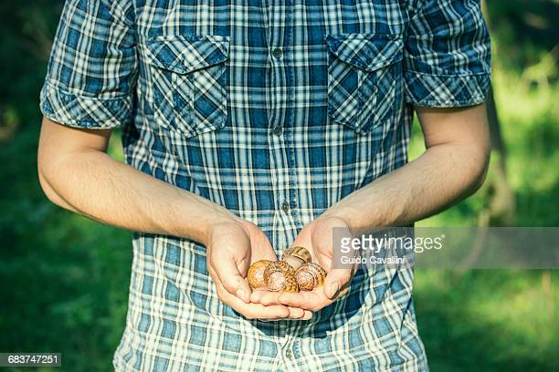 Man holding handful of foraged snails, Vogogna, Verbania, Piemonte, Italy