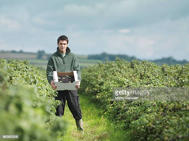 Man Holding Harvested Blackcurrants