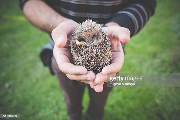 Man holding hedgehog