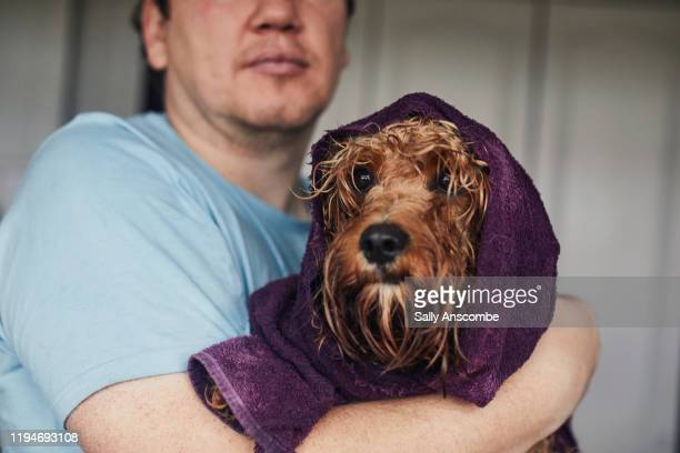 man holding his pet dog in a towel after a bath - towel stock pictures, royalty-free photos & images