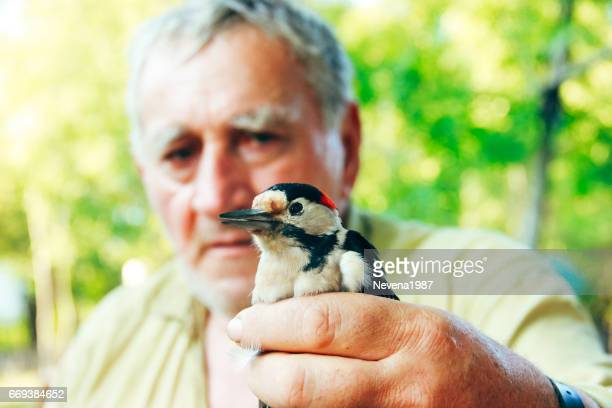 man holding in hand a woodpecker