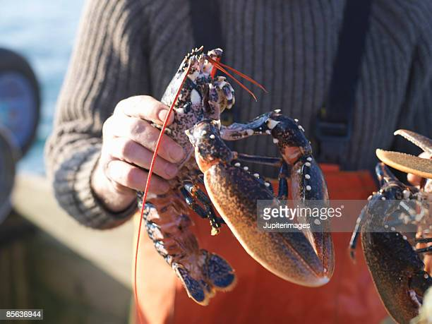 man holding lobster - newquay stock pictures, royalty-free photos & images