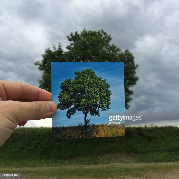 Man holding photograph of tree in front of rural landscape, niort, France