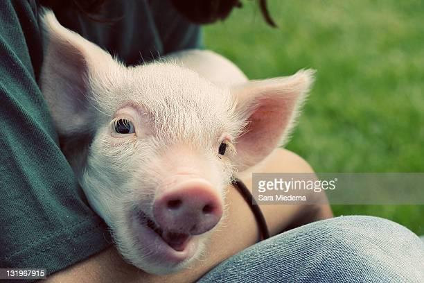 man holding piglet - grupo mediano de animales imagens e fotografias de stock