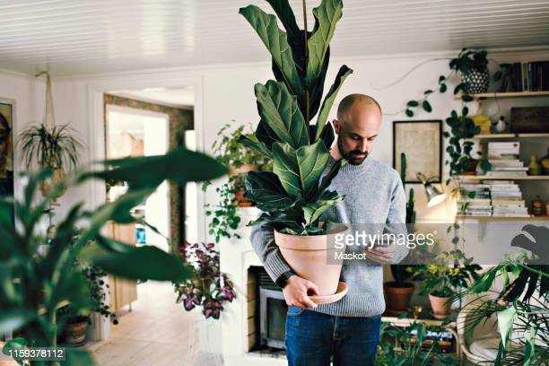 man holding potted plant while text messaging on smart phone at home - hommes d'âge moyen photos et images de collection