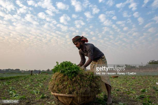 man holding rice on field against sky - savar stock pictures, royalty-free photos & images