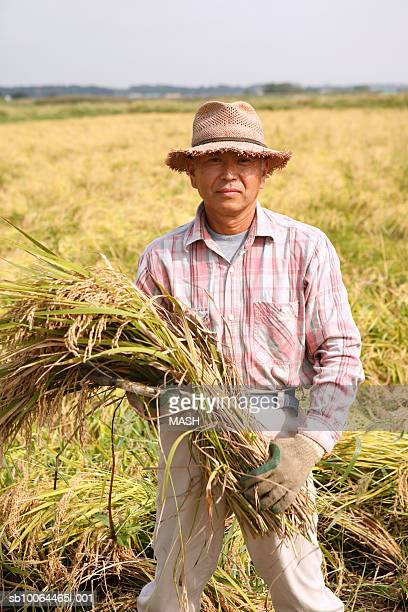 Man holding rice plant in field, portrait