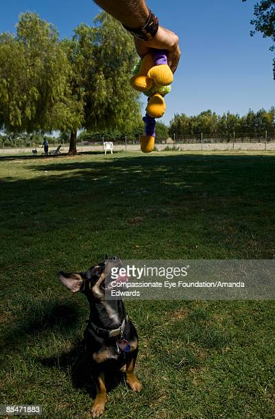 Man holding toy above dog, dog looking up