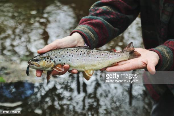 man holding trout - brown trout stock pictures, royalty-free photos & images
