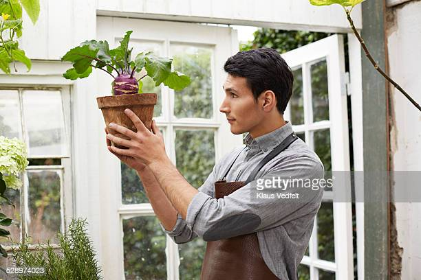 Man holding up small cabbage plant in greenhouse