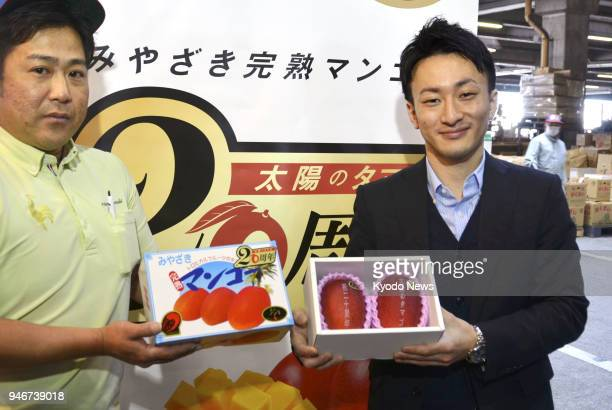 A man holds a box containing a pair of mangoes called 'Taiyo no Tamago' produced in the southwestern Japan prefecture of Miyazaki which fetched a...