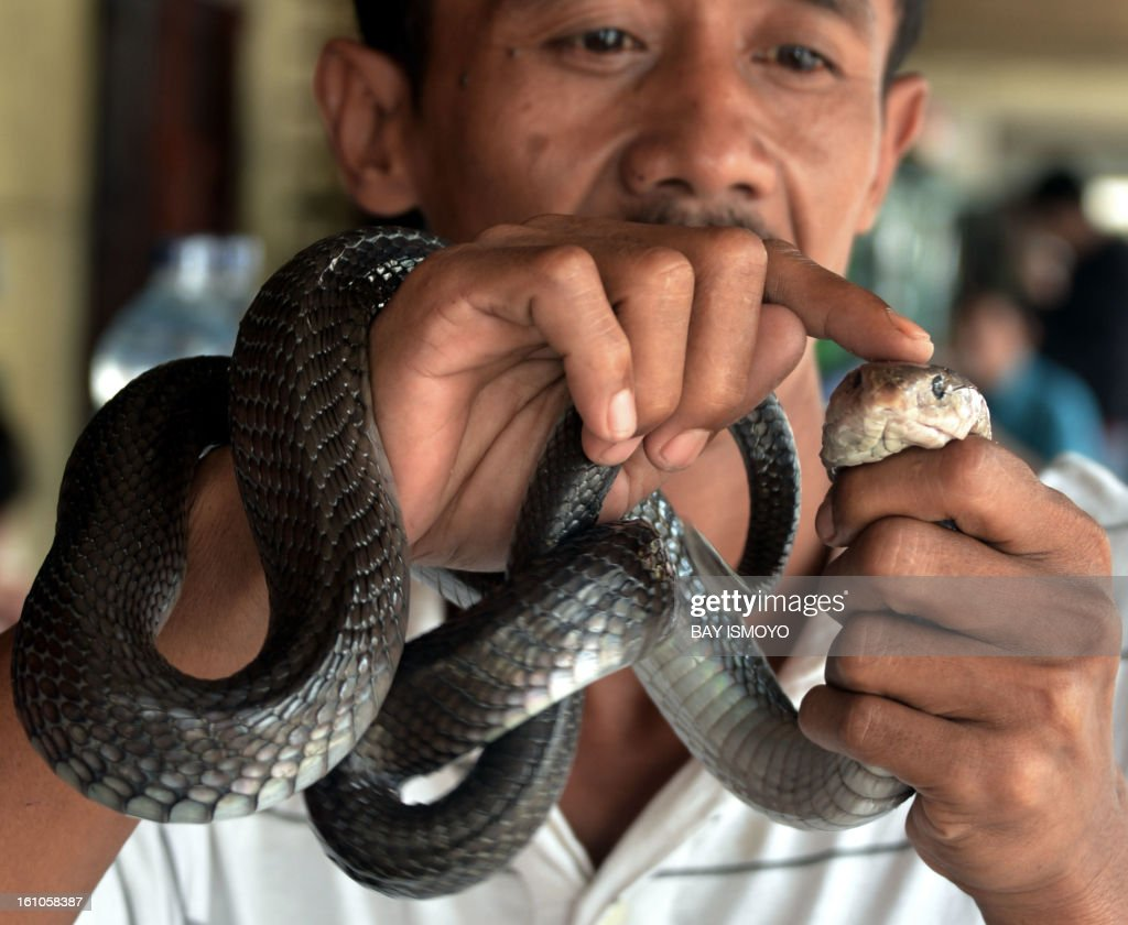 A man holds a cobra he sells for medicine at a Chinese majority business complex in the Indonesian capital city of Jakarta on February 9, 2013 the country's minority Chinese-Indonesians prepare to celebrate the Chinese New Year. The Year of the Snake falls across the region on February 10. AFP PHOTO / Bay ISMOYO