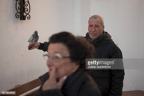 A man holds a dove before having it blessed by a priest in Churriana near Malaga on January 17 marking San Anton Abad's Day Dogs cats rabbits and...