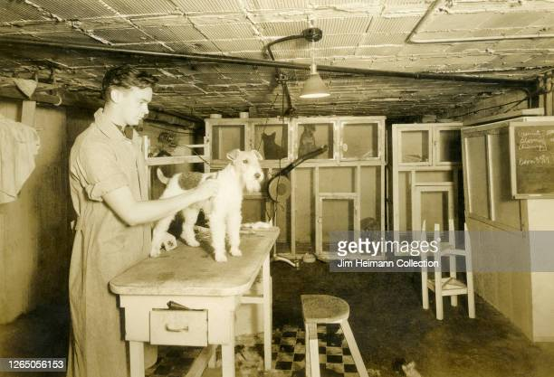Man holds a small dog in the basement of a pet grooming business, circa 1933.
