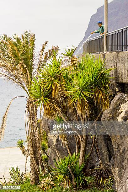 man hosing palms from above - merten snijders stock pictures, royalty-free photos & images