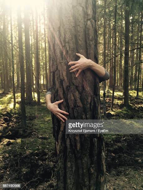 man hugging tree in forest - grab stock pictures, royalty-free photos & images