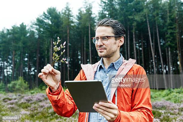 man identifying plant. - botanist stock pictures, royalty-free photos & images