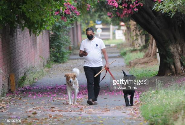 Man in a face mask out walking dogs in the morning during lockdown against coronavirus, in Sector 7 on April 16, 2020 in Chandigarh, India.
