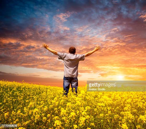 man in a field with rape with his arms raised to the sky - god stock pictures, royalty-free photos & images
