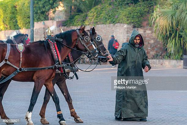 CONTENT] A man in a traditional Berber djellaba robe steadies a horsedrawn caleche carriage near the Djemaa elFnaa square in Marrakech Morocco
