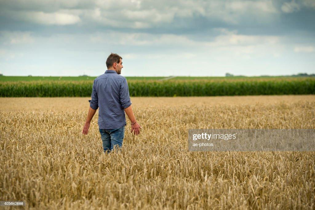 Mann in wheat field : Stock-Foto