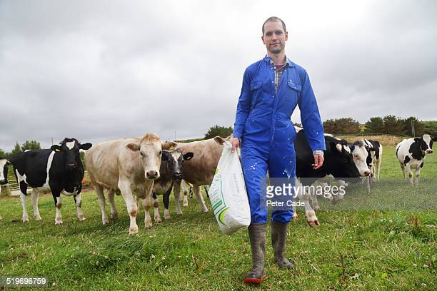 Man in blue boiler suit walking , cows in field