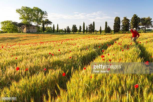 Man in field of poppies looking at farmhouse