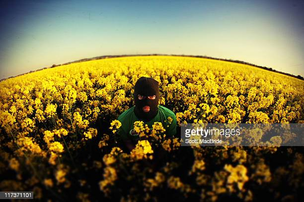 man in field - oilseed rape stock pictures, royalty-free photos & images