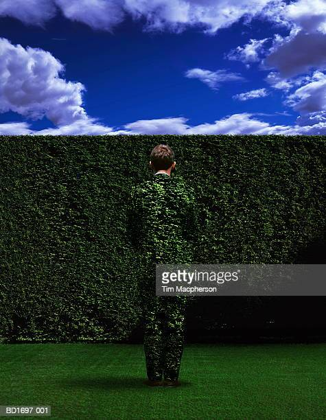 man in foliage suit standing in front of hedge (enhancement) - camouflage stock pictures, royalty-free photos & images
