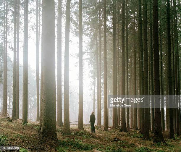 man in forest - woodland stock pictures, royalty-free photos & images