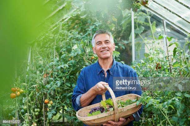 Man in greenhouse holding basket of grapes