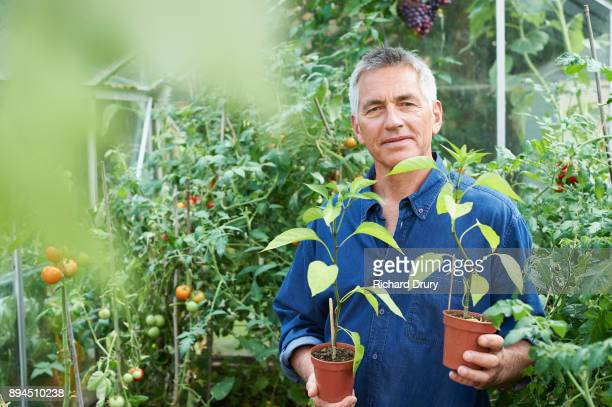 Man in greenhouse holding chilli pepper plants